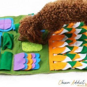 chien caniche sur tapis de fouille